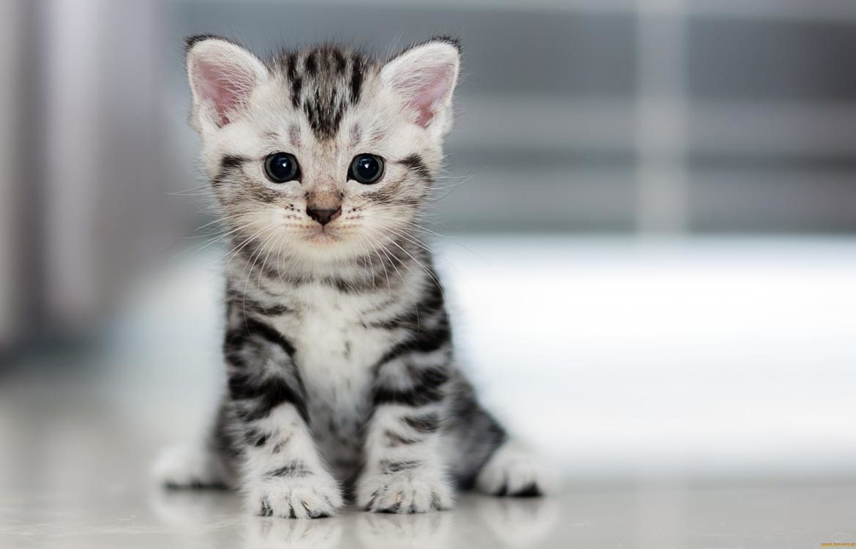 Порадуйте своего любимца, котенка