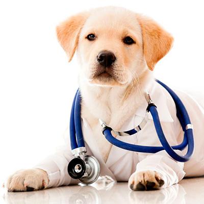 Собачьи болезни